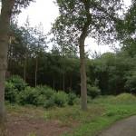 Wald hinter dem Haus